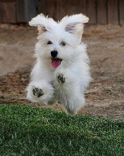 Perro salta alegria