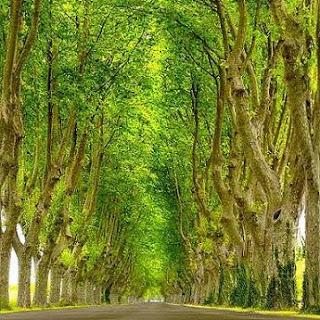 paseo arboles tranquilidad