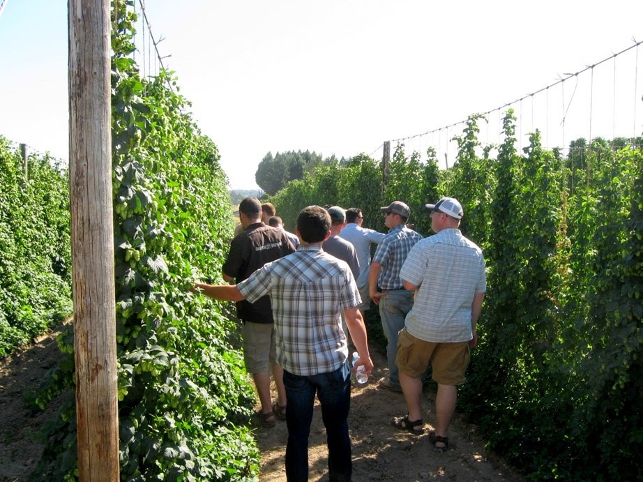 Hop Trellis Ideas Part - 48: Nutrients Are Preserved When They Can Run Down Into The Root System--making  Plants Hardier And Healthier.