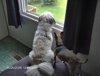 Nisie and Jake Looking Outside