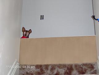 Peek-a-Boo Jake