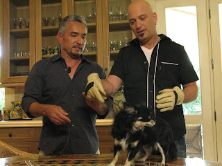 The Dog Whisperer Cesar Millan with Howie Mandel