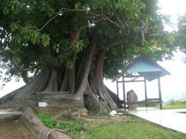 Makam I Mayambungi (Todilaling)