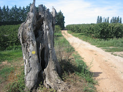FRENCH CHEMIN NEAR ARLES