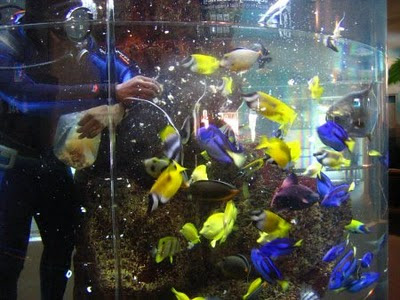 Underwater World - different color fishes