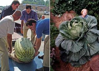 As maiores frutas e verduras do Mundo!, aqui no Muleque Doido