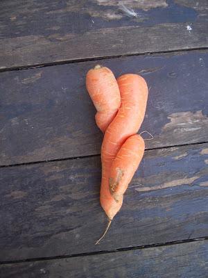 Curiosité : carottes amoureuses ?