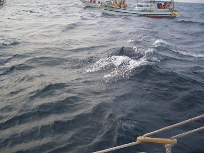 イルカの大群を船上から見学