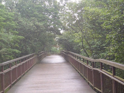 小雨の木道