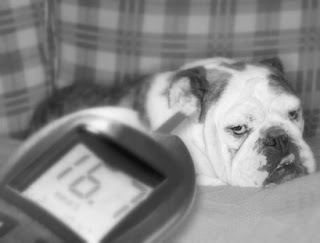 Treatment for type 2 diabetes in dogs blindness