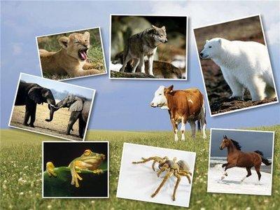 HD Animal Wallpapers 100 JPEG   1600 x 1200   Multiple Mirrors   37 MB
