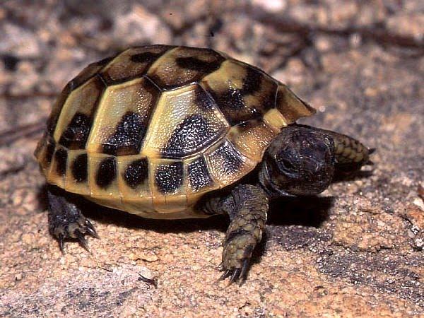 Rettili for Temperatura tartarughe