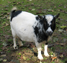 GoatGirl