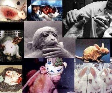 [crueldade+animal.jpg]