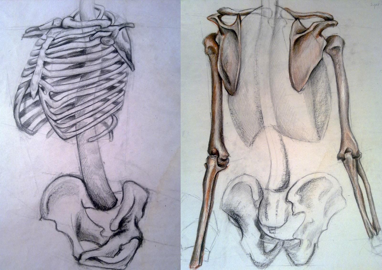 Visual Development Artist Animatorfilm Maker Life Drawing Anatomy