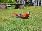 Loro (Parrot)