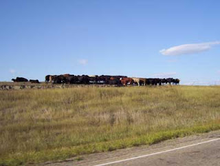 Cows gathered together near side of the road.