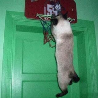 http://4.bp.blogspot.com/_XiaUBof_xDM/SYIOXgxpsaI/AAAAAAAAAC0/8Jfl-8NhVHw/s320/cat+playing+bball.jpg