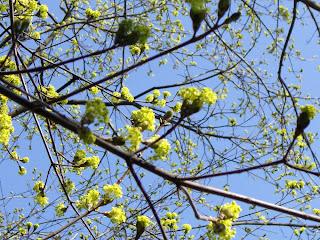 blossoming (onemorehandbag)