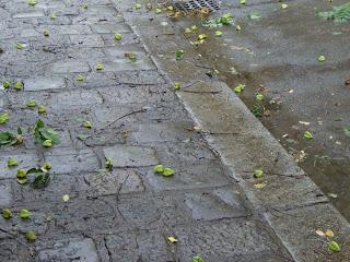 rainy streets (onemorehandbag)