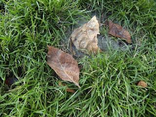 leaves (onemorehandbag)