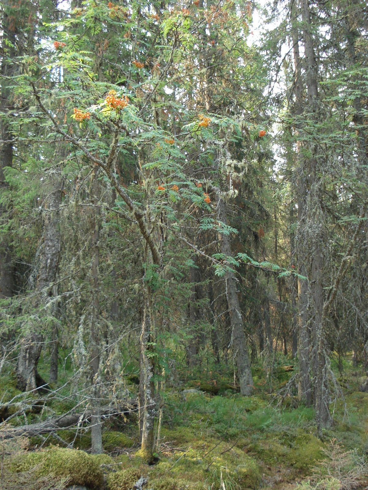 Фото привязанные в лесу 20 фотография