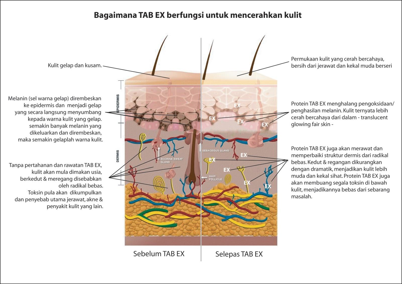 Fungsi tab ex mencerahkan kulit dari dalam miracle tabex ccuart Image collections