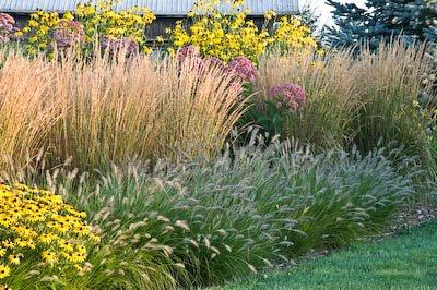 Country gardener august 2008 for Grasses for flower beds