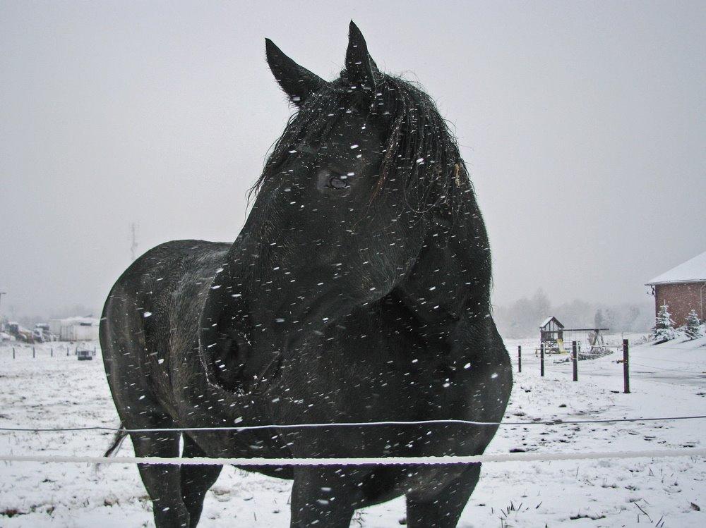 [black+horse+-+snow+750+1]