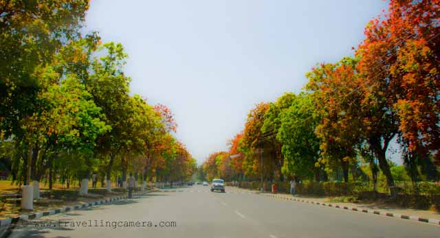 Spring Colors around Clean Roades of Chandigarh: Recently I was there in Chandigarh to attend a marriage. One of my friends in Chadigarh had bought Tata Nano and we planned to have a round from Mohali to Sukhna Lake. Here are few Photographs of Chandigarh City... I loved these colors and still missing cool breeze of Chandigarh in month of April...: Posted by VJ on PHOTO JOURNEY @ www.travellingcamera.com : VJ, ripple, Vijay Kumar Sharma, ripple4photography, Frozen Moments, photographs, Photography, ripple (VJ), VJ, Ripple (VJ) Photography, VJ-Photography, Capture Present for Future, Freeze Present for Future, ripple (VJ) Photographs , VJ Photographs, Ripple (VJ) Photography : Colorful Trees inside Punjab University Campus. This road is inside PU campus... U can notice no divider in this road...