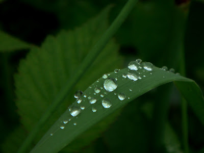 Image showing rain drop just after drizzling in Himachal. I really like rains and these drops attract me