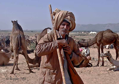 Posted by Ripple (VJ) : Padharo Mhare Desh : Rajasthan, INDIA : A Camel Tamer in the Pushkar Fair
