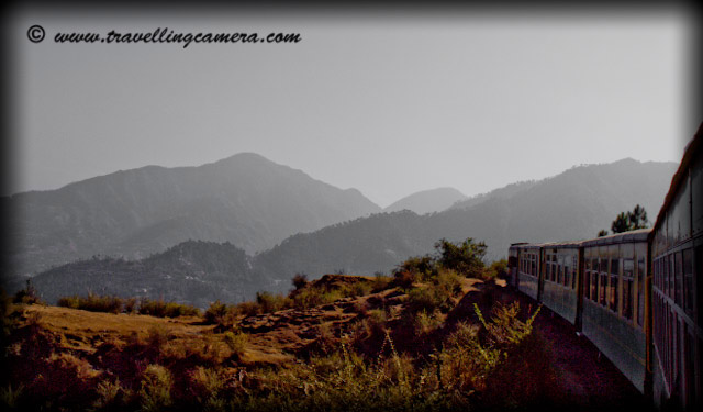 Views between Kalka and Shimla through Himalyan Queen: Posted by VJ @ www.travellingcamera.com:: Himachal, himalayas, Himachal Pradesh, Hill Stations, Hills, Snow Covered Hills, Snow, Toy-Trains, Trains, Railway, Railway-Stations, Tunnels, Bridges, Roads,  States, Solan, Shimla, Deodars, Pine Trees, Nature, Journey, Train-Journey, : Here are few photographs from my toy-train experience between Shimla and Kalka. It takes 7 hrs to reach Kalka from Shimla if you choose to go by Himalayan Queen. Check out photographs below and you will appreciate the time spend during this journey...Toy train crosses various mountains, rivers, tunnels and bridges to reach Kalka. For those, who prefer to explore beauty of nature on their travel to India, I think the beautiful hill state of Himachal Pradesh is the right place for them. The state is gifted with superb natural beauty . It is the land where snow-capped mountain peaks of mighty Himalayas touch the clear blue sky.It is a land where meadows of colorful wild flowers lure the tourists and make the environment enjoyable with their sweet fragrance. As we cross Tara Devi, suddenly environment changes with new colors... Pine Tree instead of Deodars... Comparitively less green hills and so on.... But thats special about this journey where travelers start from very high hills covered with Deodars and then it changes to small hills with pine tree and then plains... These Toy trains are very well maintained by Indian Railways...The rail route has 107 tunnels but the train passes through 103 tunnels, big and small. The toy trains cross the longest tunnel at Barog in 3 minutes. Besides the Barog tunnel, other 3 big tunnels on this route are Koti - 2,276 feet, Taradevi - 1,615 feet and Tunnel no. 103 - 1,135 feet.Dense fog welcoming us after longest tunnel of Barog... Before this, it was hot due to harsh sun light... Everyone in our train was very excited after this but it became boring when we were not able to see anything around us....During this journey, weather changed suddenly  after crossing the longest tunnel of Barog.  It  are bollywood style change  where  you feel like magic ...  It was very difficult to see  the things around us... After some  time, this mist entered into the train and  we were not able to see faces sitting  on third  seat @ the distance to 12 feets approximately...A view of Shimla Town from Tara Devi Railway Track... During this visit, I stayed in New Shimla which is very well planned region and Shimla really needs better planning in future..Mustard fields on the way to Kalka through Toy-Train from Shimla. This has been shot near Solan which is a district headquarter of Himachal pardesh and a beautiful valley. Solan is well developed distrcit in terms of Education, research and industrial development...Himachal Pradesh is a perfect destination for tourists who love to see nature at its best.The rail track rises from Kalka at 640m to the freezing zones of Shimla at 2,060 m. A tour from Kalka to Shimla is just amazing. The toy train twists its way gradually through the hills up to the alpine, approaching of the demeaning Himalayas. Through the way some of the awesome views of the landscape can be cherished at Kushalya River, Koti, Barog, Kanoh, Jabli ...