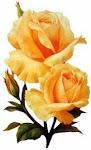Rosas Amarillas,si las quieres ? Cojelas.