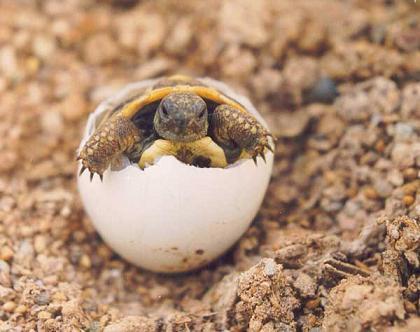 Animales que nacen del huevo - Imagui
