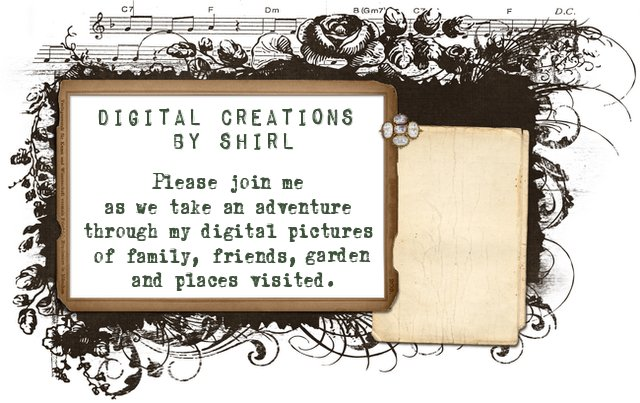 Digital Creations by Shirl