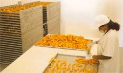 SALON EMPRENDEDOR-VE Para su Fabrica de Deshidratados Frutas y Vegetales p/su Negocio Propio