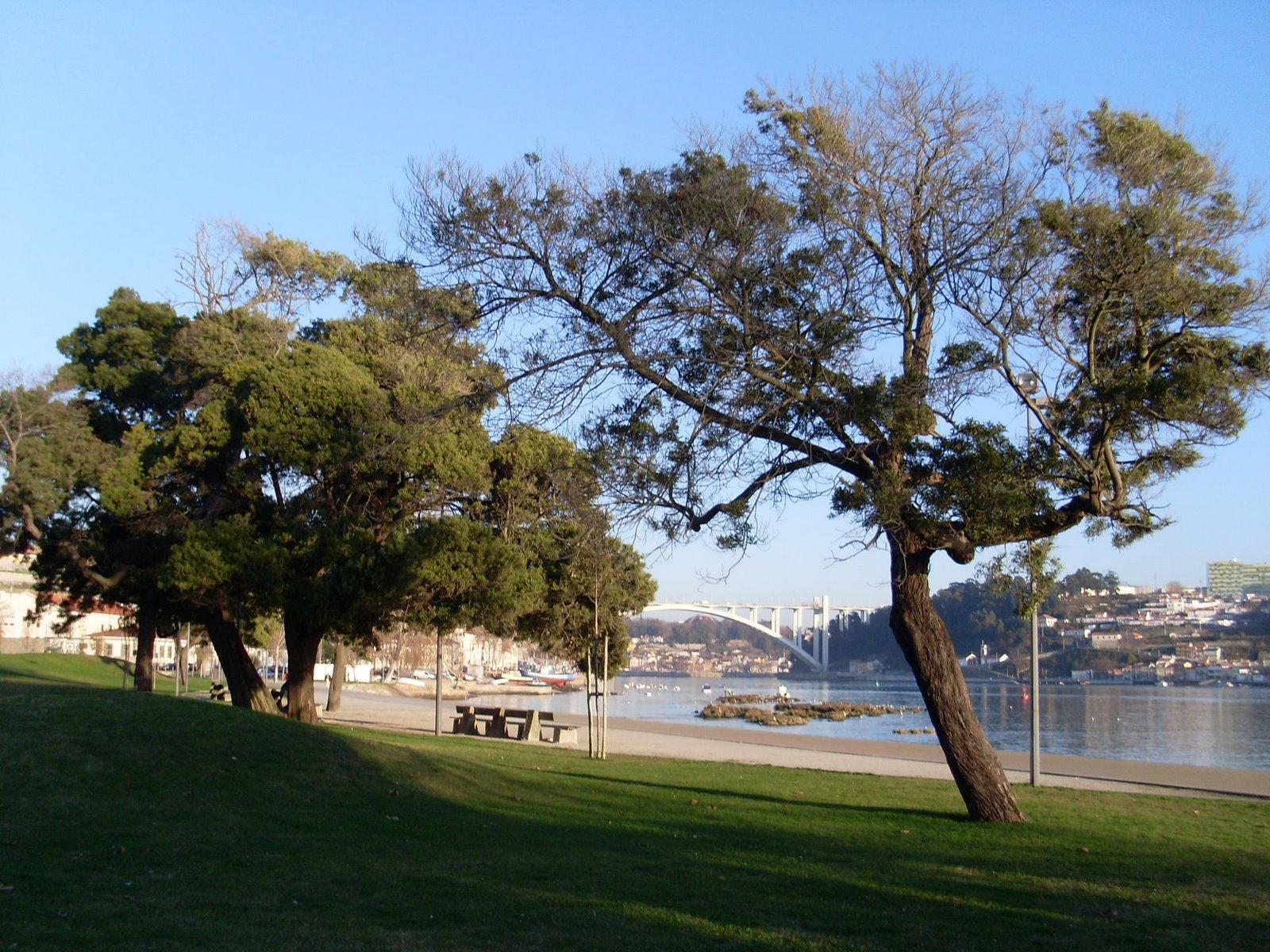 Douro, margem direita