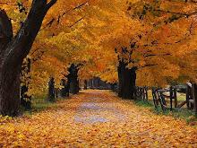 Outono desfolhou-se numa agonia lenta