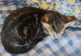 My Cat Sadie