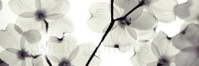 • Rositalira.Photography©