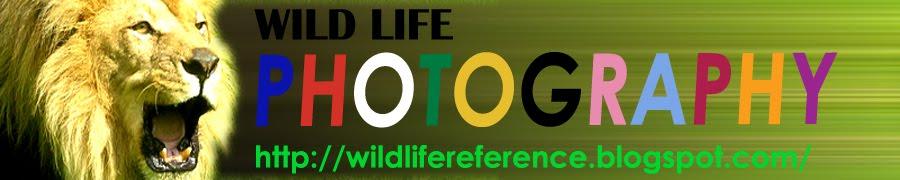 Wildlife Photography Art