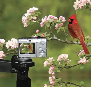 become bird watcher and Professional Photographer in wildlife discovery journal