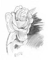 como dibujar una rosa YouTube - Imagenes De Rosas Dibujadas A Lapiz