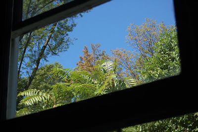 Blue sky and trees through a window.