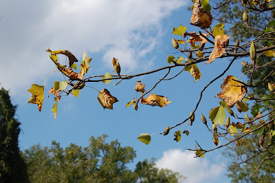 Autumn leaves and blue sky.