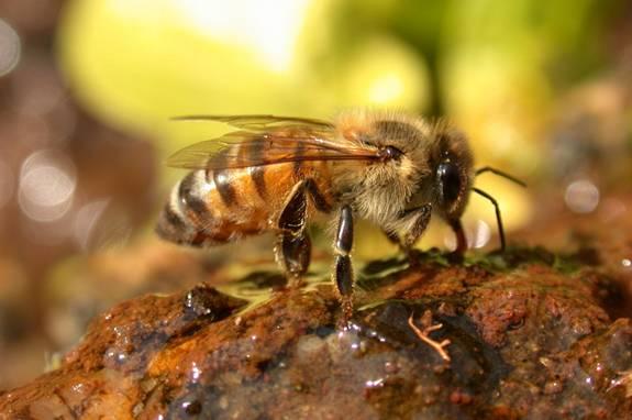 [killer+bee.jpg]