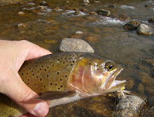 Logan River Cutthroat