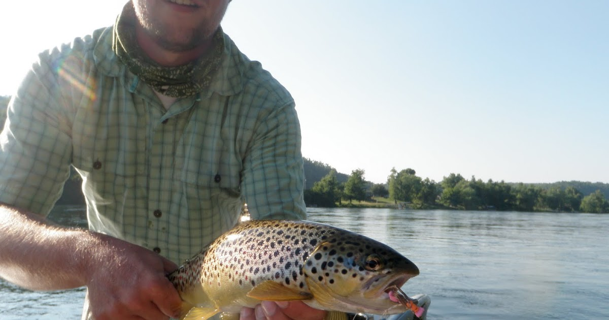 Arkansas fly fishing report white river below bull shoals for Ar fishing report