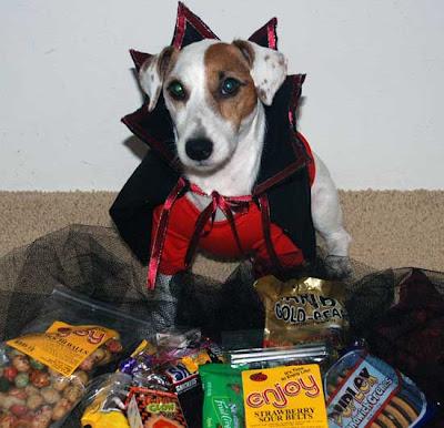 vampire puppies LOVE Trick'er'Treating!!